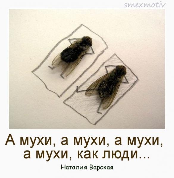 Демотиватор мухи с одного